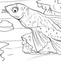 catfish coloring page