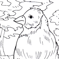 Domestic animals coloring book for Finch coloring page
