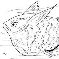 Hatchet Fish Coloring Book Pig Page