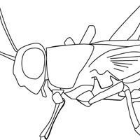 Insects coloring pages for kids
