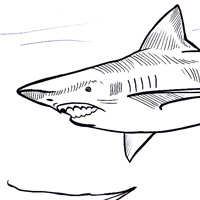 Megalodon coloring pages