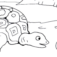 tortoise coloring picture