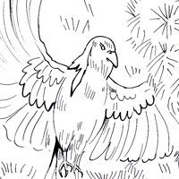 whydah coloring page