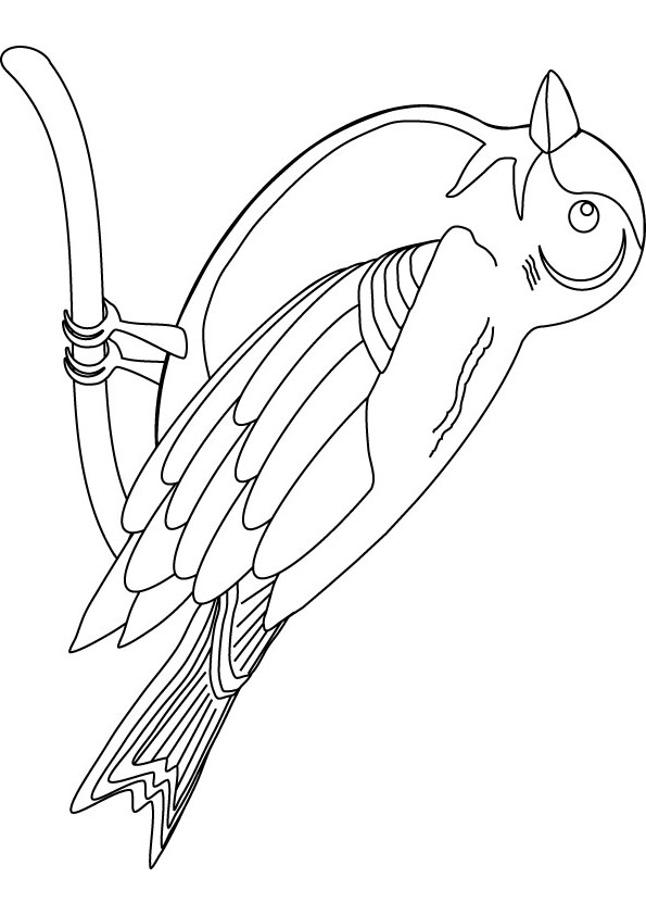 Finch bird coloring page