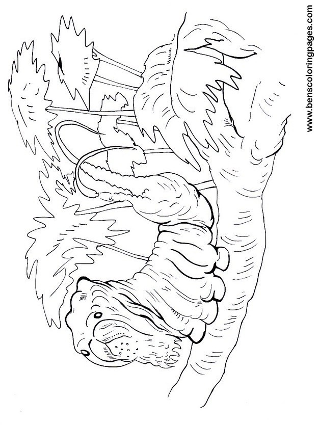 caterpillar coloring picture print