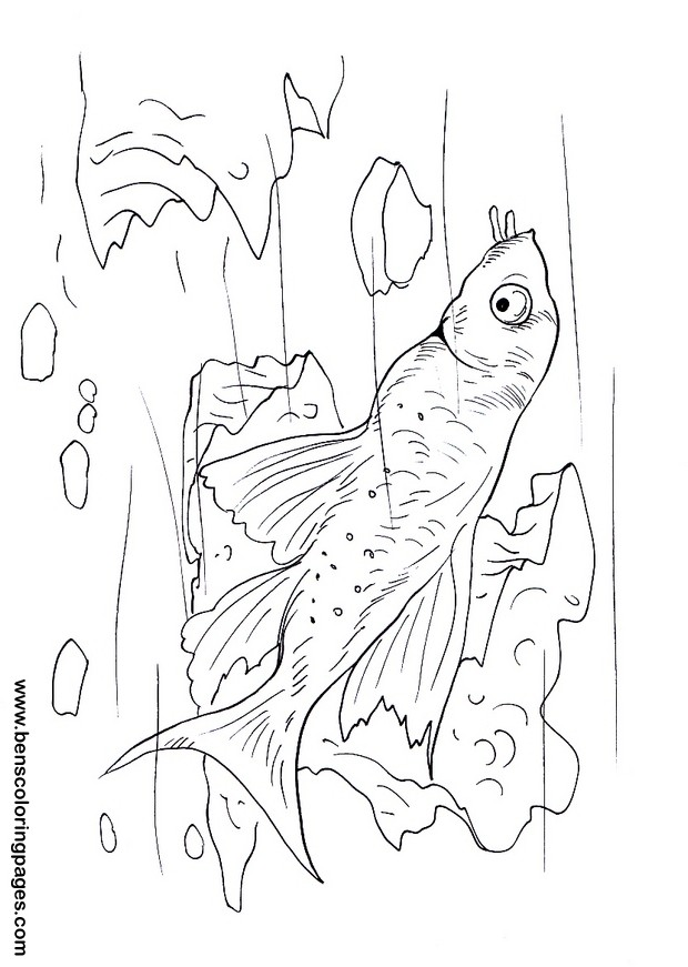 zack and quack coloring pages - photo#47