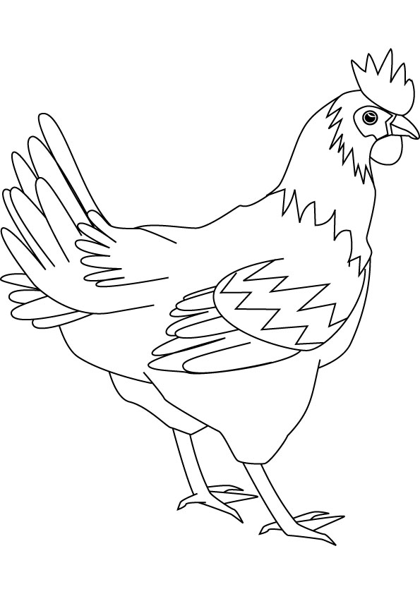hen coloring picture for free