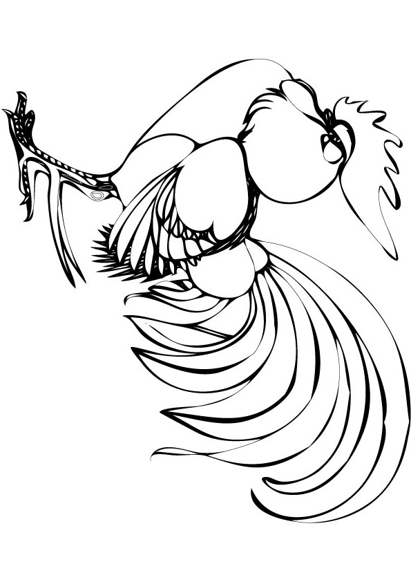 cockrel coloring picture for free