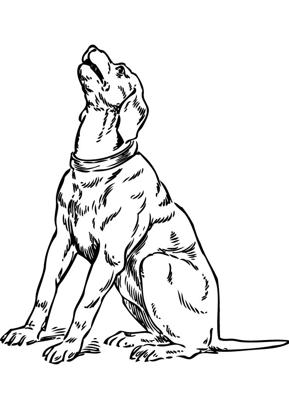dog coloring picture for free
