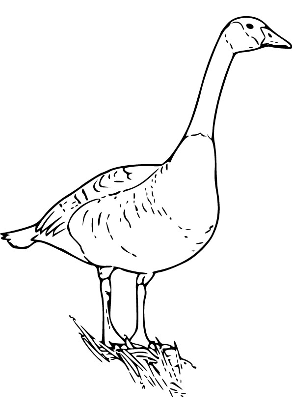 Download Free Goose Drawing Page