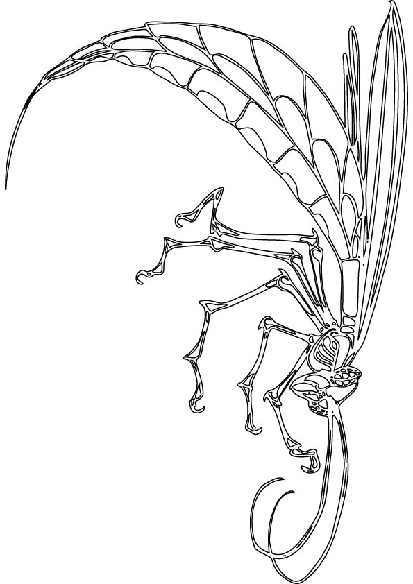 download free dragon fly drawing