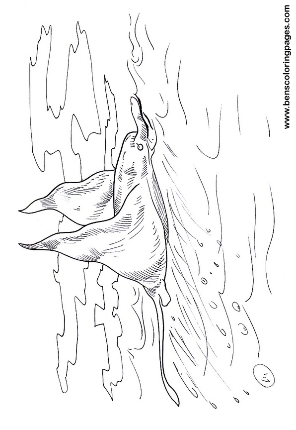 manta ray coloring pages - photo#17