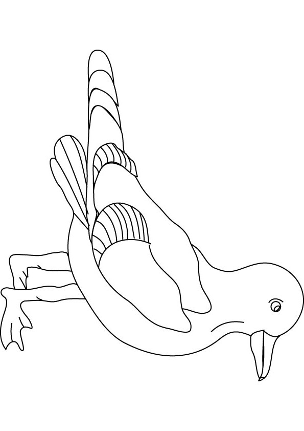 Seagull Coloring Pages Kidsuki