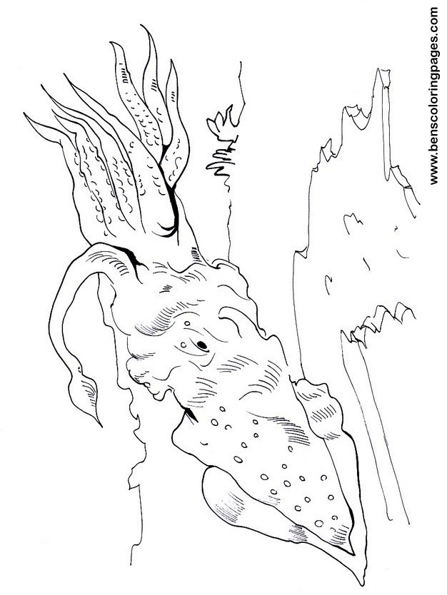 giant squid coloring pages - photo#20