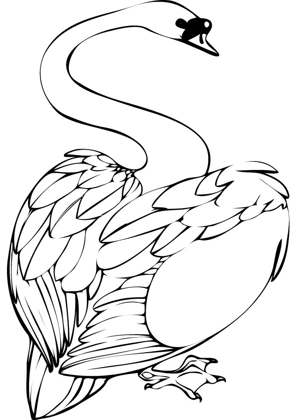 Swan coloring pages animal pictures