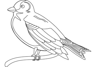Finch bird coloring page for Finch coloring page