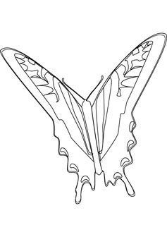 butterfly drawing books