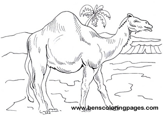 camel pictures to color