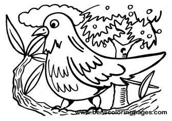 Bird coloring book page