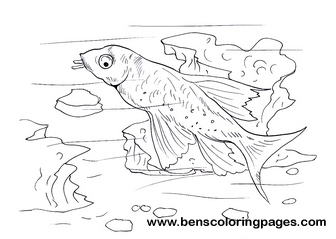 Catfish free coloring pages