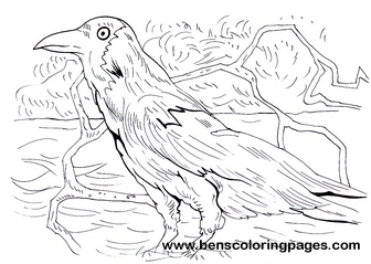 crow pictures to color