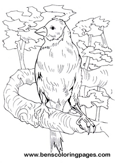 Finch free pages to color for Finch coloring page