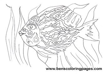 fish catcher coloring for kids