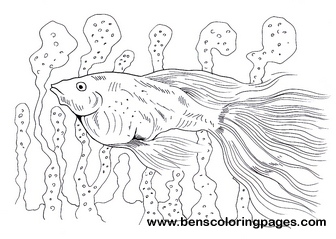 Guppy Fish Free Page To Color Guppies Coloring Page