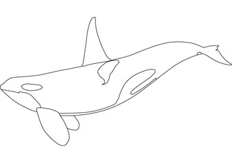 Orca Printable Coloring Pages Killer Whale Coloring Pages