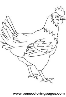hen drawing book