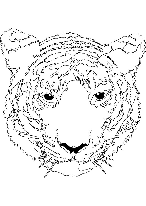 tiger colouring picture