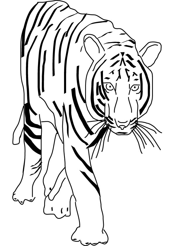 Tiger Roaring Coloring Book Pages