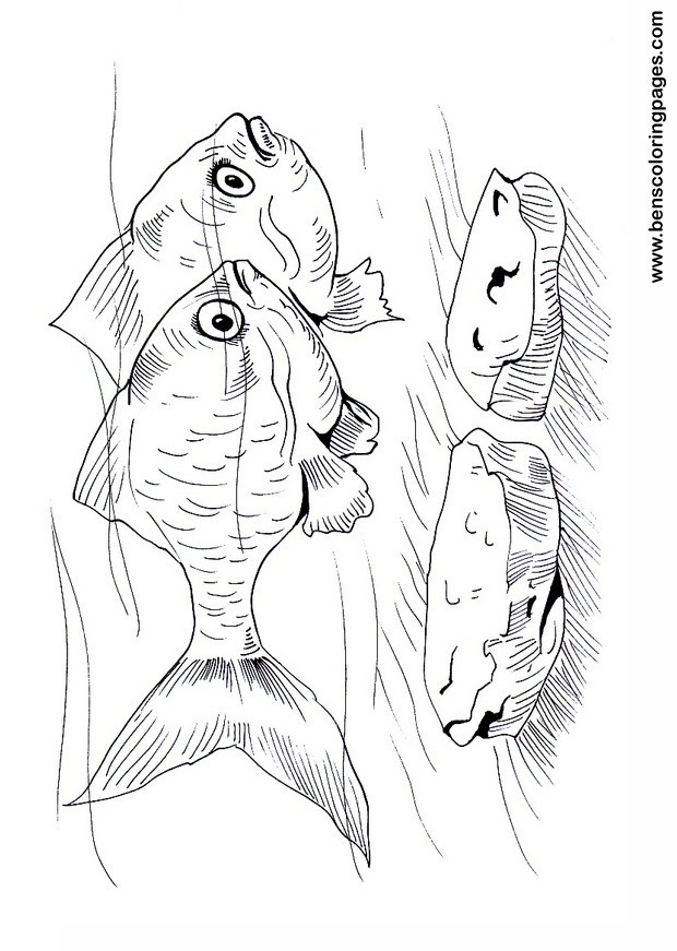 tiger barb coloring sheet