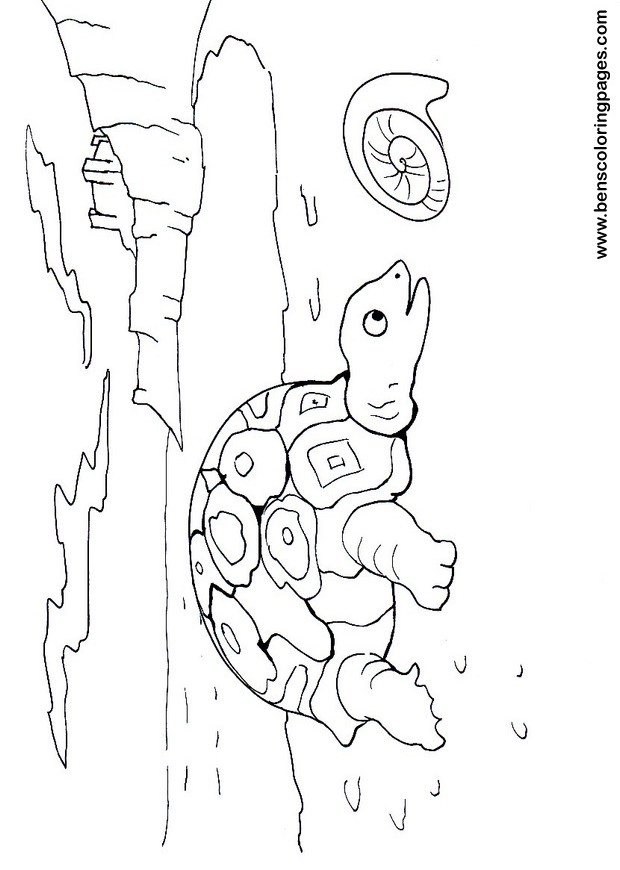 tortoise coloring sheet
