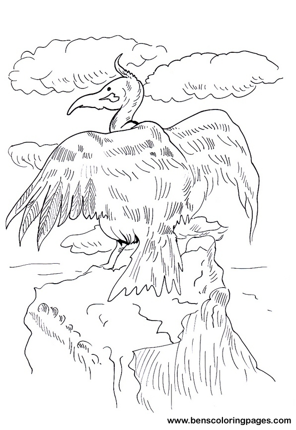 vulture coloring picture
