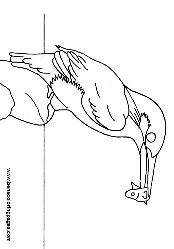 Kingfisher coloring book